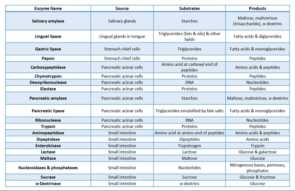 Digestive Enzyme Chart