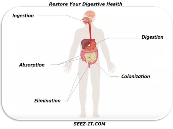 Restore Your Digestive Health